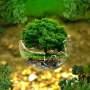 Ζώδια και οικολογική δράση
